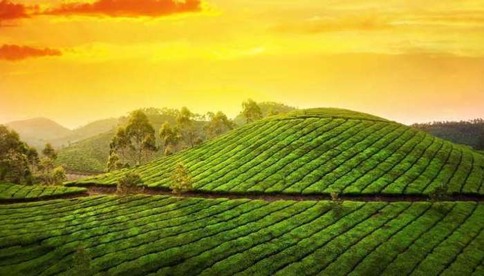 Best Places to Visit in Kerala That You Must Fall upon