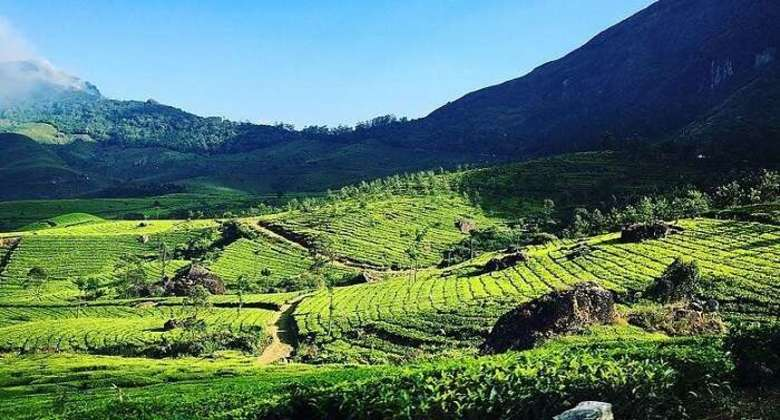 Top Places to visit in Munnar for an Exciting Trip